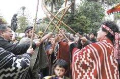 mapuches consulta indigena